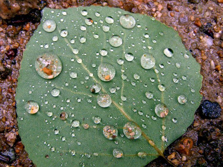 Leaf copy