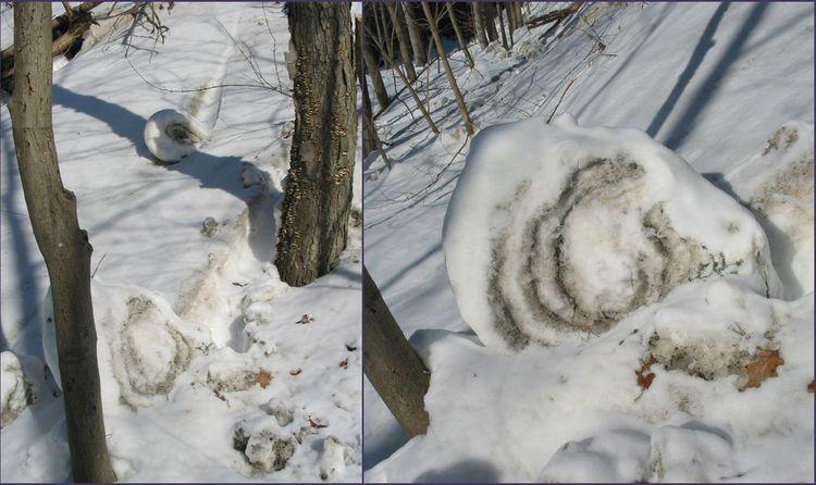 Snowrollers copy