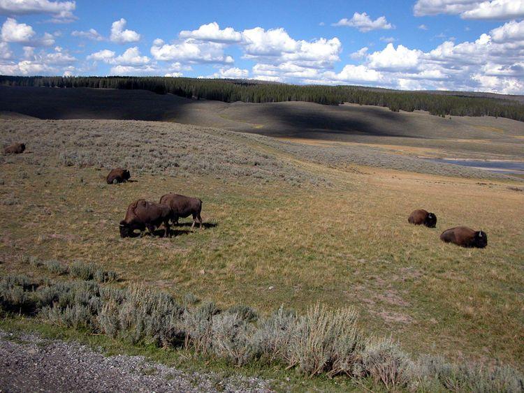 042109_Yellowstone