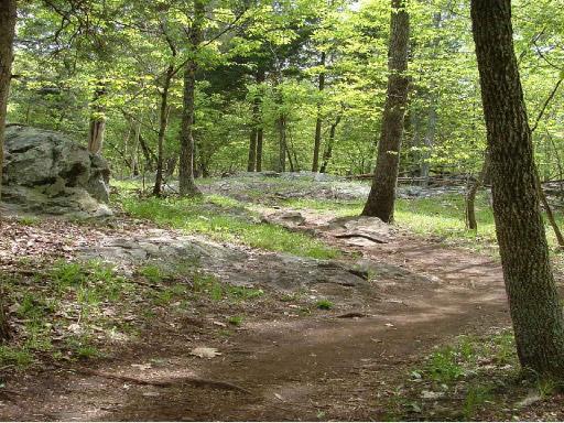 Woodsbi2