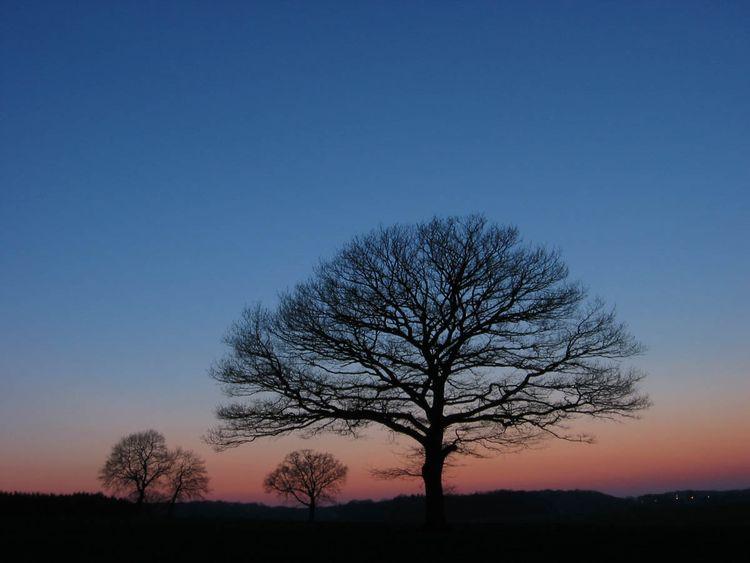 Twilight-evrange-trees-29mar2004-18h45z copy