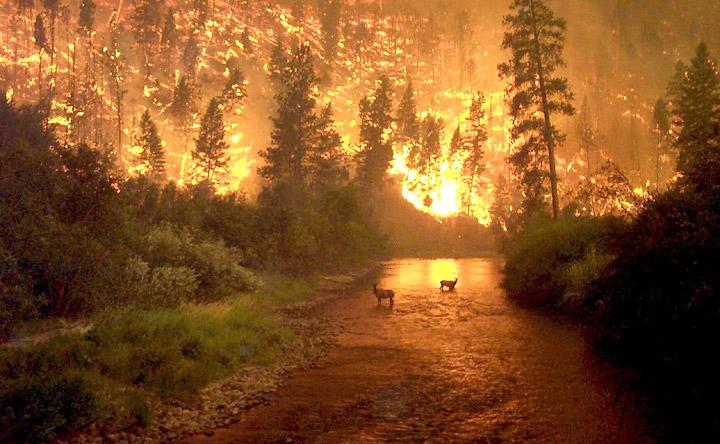 Mccolganfire