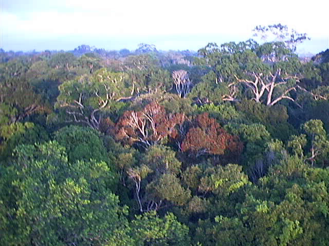 Rainforest - Simple English Wikipedia, the free encyclopedia