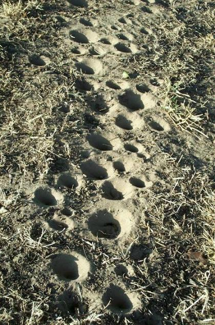 Insecttracks