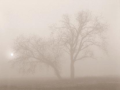 Treeinfog