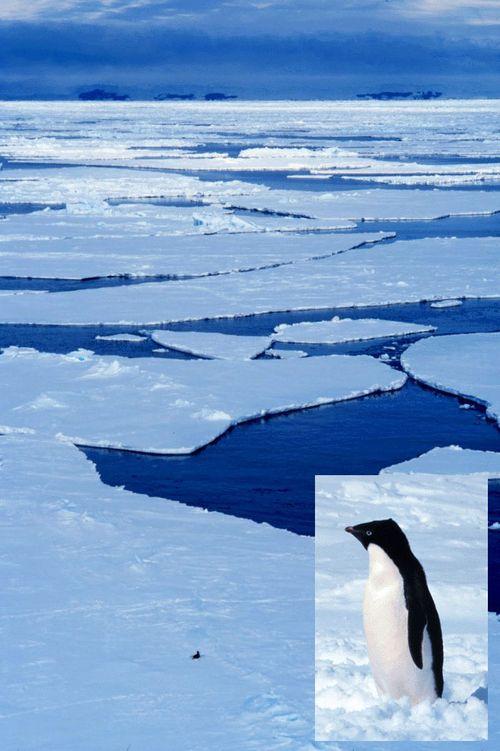 Penguincomposite