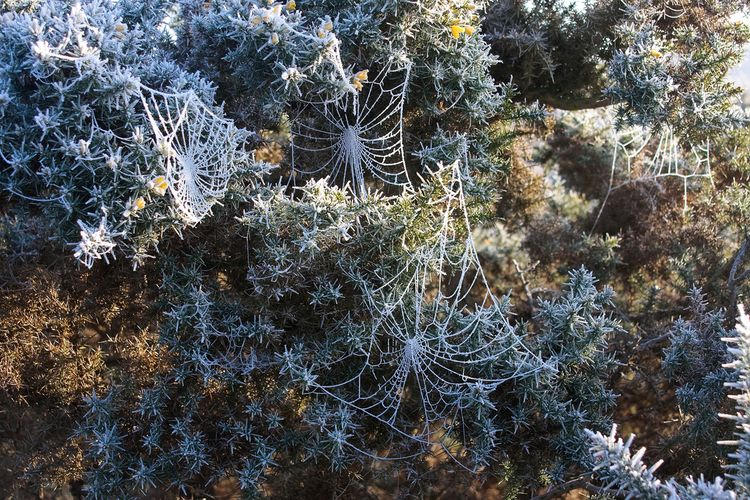 20090924 – Thursday - Frost Covered Spider Webs